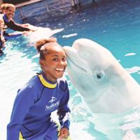 SeaWorld Adventure Park Orlando attraction photo